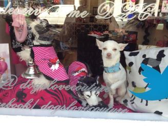 """Pops from """"Dogs Love Couture"""" in Partick, Glasgow"""