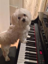 """Teddy plays the blues.  Teddy from """"Dogs Love Couture"""" in Partick."""